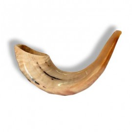 Curved Ram's Horn Shofar
