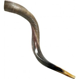 Half Polished Yemenite Shofar