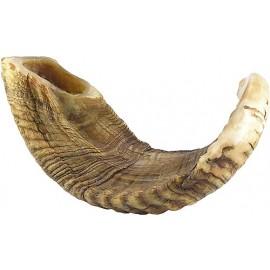 Rare Natural Ram's Horn Shofar
