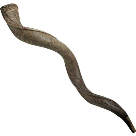 Natural Yemenite Shofar - Medium Sizes